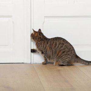 L'intuition en exercice : ouvrez la porte
