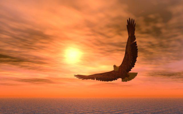Quel rôle pour l'animal dans notre spiritualité1