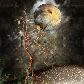 Night with tree