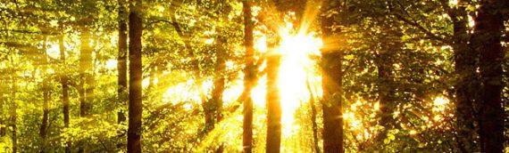 Régressions, réincarnations et … une sacrée surprise