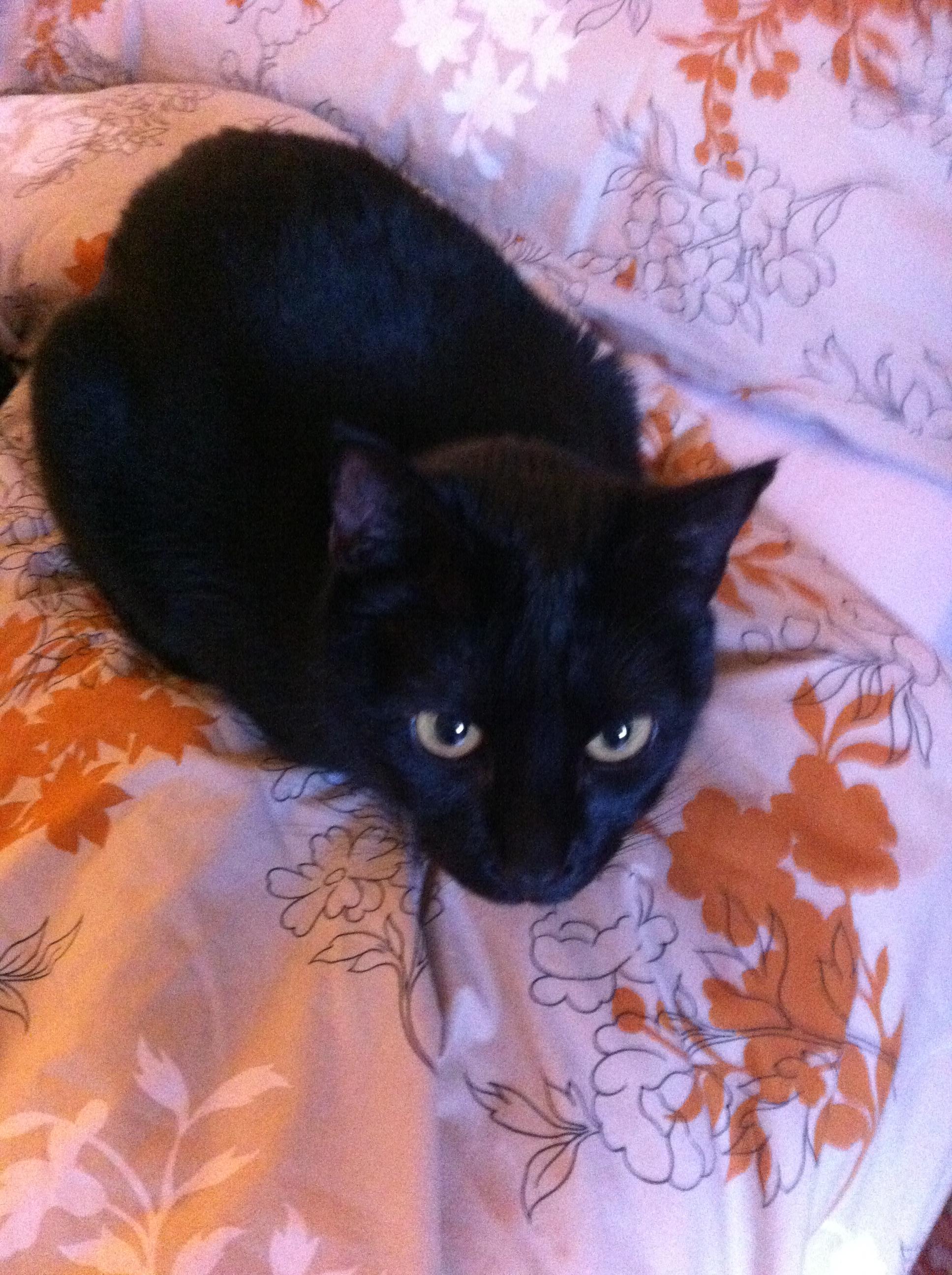 Un chat noir, c'est un mauvais signe ?