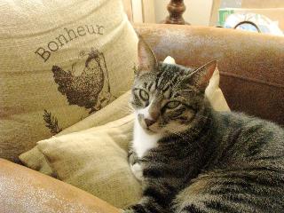 Frimousse le chat télépathe