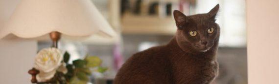 le 6e sens des animaux : aujourd'hui les chats