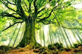 L'intuition et l'arbre