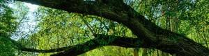 arbre-sur-riviere