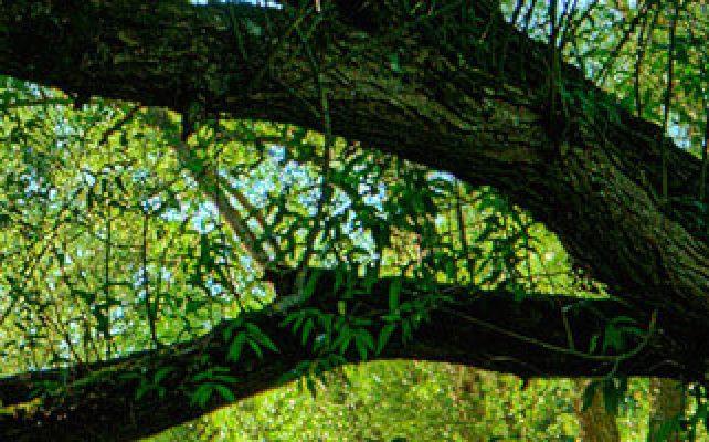 Decodons vos lectures intuitives de l'arbre
